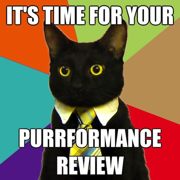 business-cat-purrformance-review
