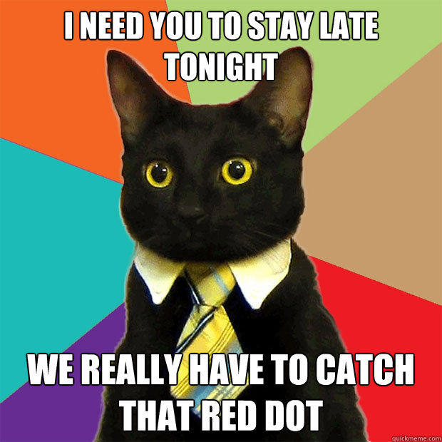 business-cat-stay-late