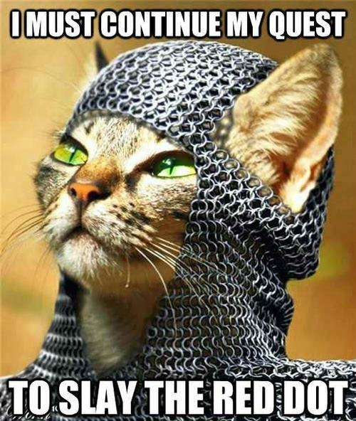 Funny-Cat-Quest-to-Slay-the-Red-Dot