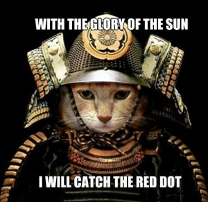 funny-lolcats-cats-glory-sun-catch-red-dot-samauri-humor-joke-meme-photo-pic-300x291