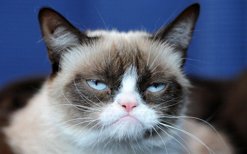 grumpy-cat-millionaire
